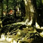 平成の神隠しは天狗の仕業か?徳島県で起きた神隠しの全貌