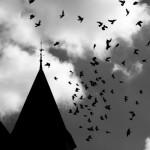 毎年インドのジャティンガで起こる 「鳥の大量自殺」