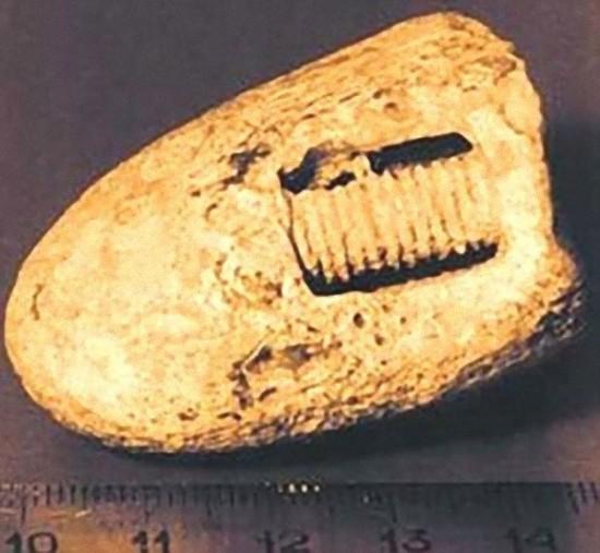 3億年前のネジ