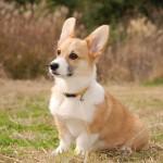 韓国が禁断の果実に手を出した!クローン犬の誕生で人間以外の生命をコントロール出来るようになった