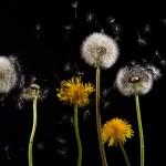 """大手製薬会社が絶対に公にさせない""""花粉症特効薬""""の存在"""